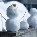 十日町雪まつりの歴史2019!十日町が雪まつり発祥の地って本当?