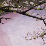 千鳥ヶ淵の桜2019開花状況・見頃・日程を紹介!ライブカメラはある?
