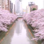目黒川の桜クルーズ2019クルーズ船の詳細と開花予想を紹介!