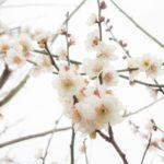 春分の日とは?由来、意味を紹介2019!今年の春分の日はいつ?