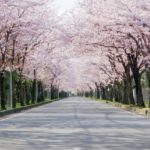 花見弁当2019宅配・デパートそれぞれ人気のものを紹介!