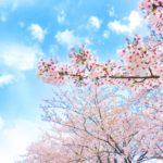 茂原桜まつり2019屋台、駐車場、場所、アクセス情報を紹介!