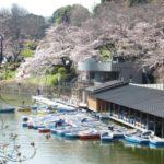 千鳥ヶ淵の桜2019ライトアップとボート(混雑、待ち時間)情報を紹介!