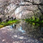 弘前桜祭り2019出店・イベント・桜ハートの場所・お化け屋敷を紹介!
