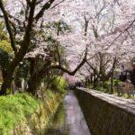 高遠の桜2019アクセス・駐車場・日程・場所を紹介!