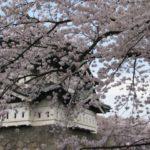 弘前桜祭り2019開花予想・日程・期間・来場者数情報を紹介!