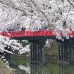 弘前桜祭り2019駐車場の穴場・シャトルバス・アクセス情報を紹介!