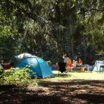 ゴールデンウィーク2019関西のキャンプ場でペット可の場所はある?