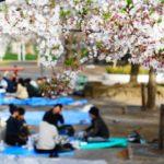 新宿御苑の桜2019!ライトアップ・場所・屋台・アクセス情報を紹介!