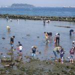潮干狩り2019福岡県の無料・おすすめスポットを紹介!